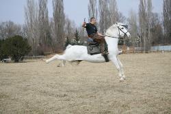 Трениране на конете